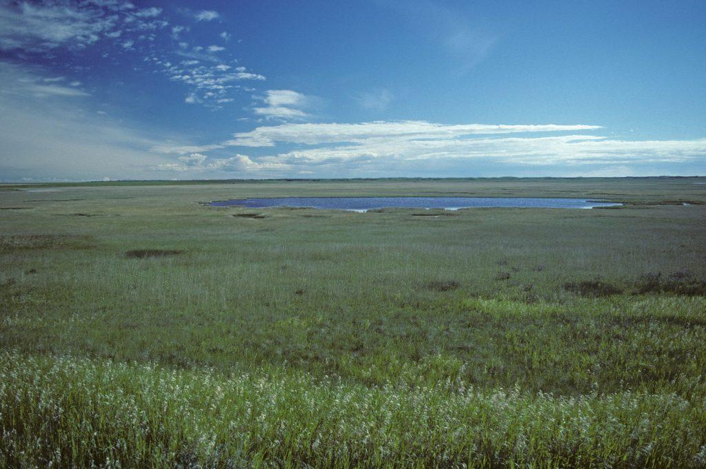 Kirkpatrick Prairie. Photo credit C. Wallis