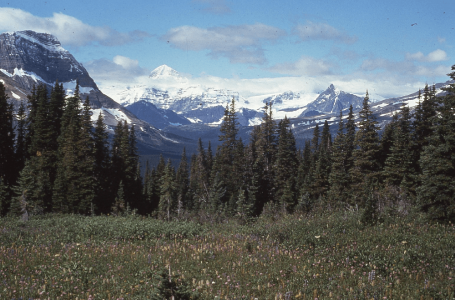 Kakwa's glaciated peaks and forest foothills are home to many of Alberta's quintessential species such as woodland caribou and grizzly bears.PHOTO: © AWA FILES