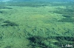 Caribou Mountains Patterned Fen