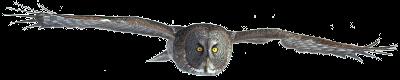 Great Gray Owl Awards