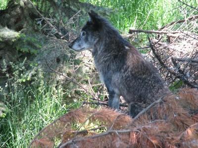 Wolf, N.Douglas