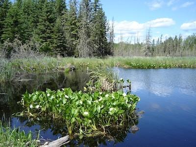 Beaver pond, Lakeland Provincial Park
